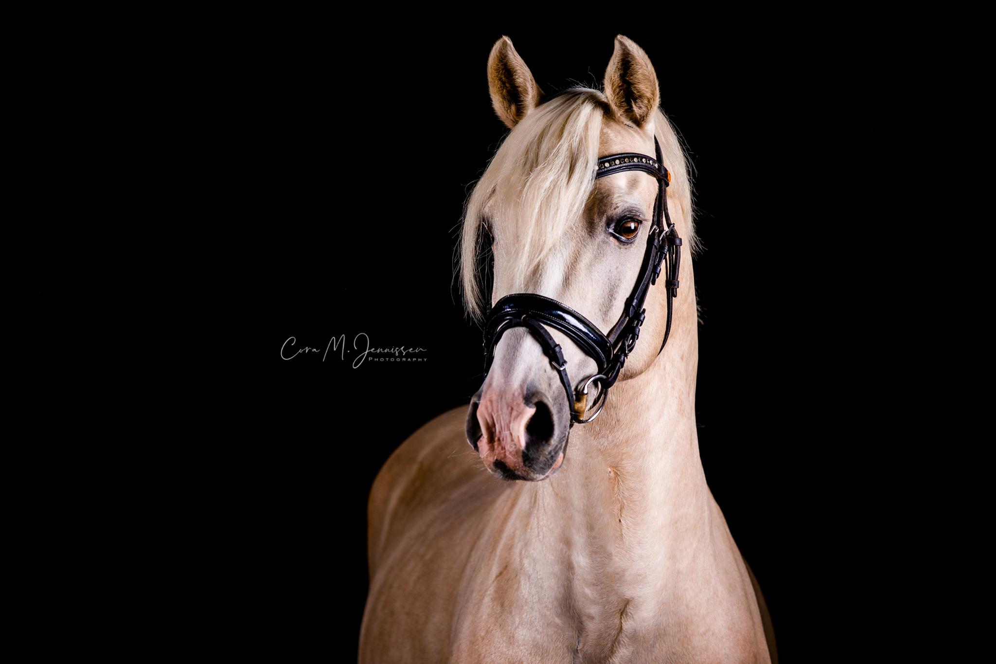 Pferd-hell