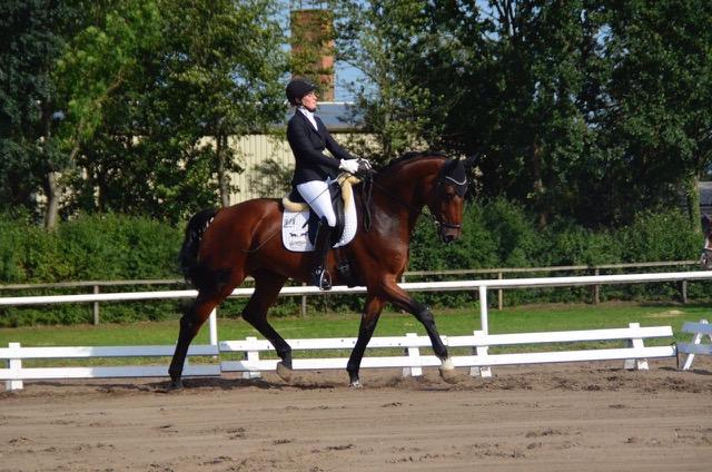 Pferd1