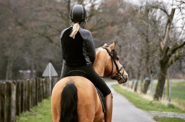 LisaPferd-hinten-1